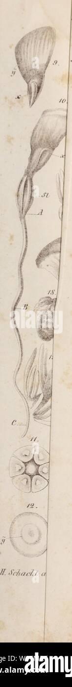 Imagen de archivo de la página 774 de Der Baum (1860). Der baum derbaum00scha Año: 1860 Foto de stock