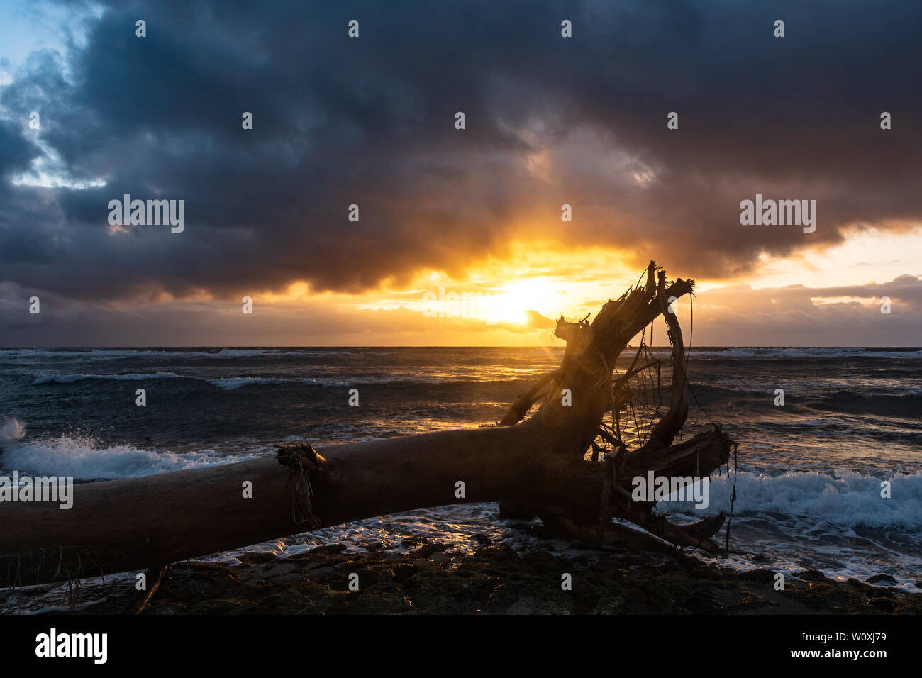Árbol muerto en la playa de sunrise, Kauaii, Hawai Foto de stock