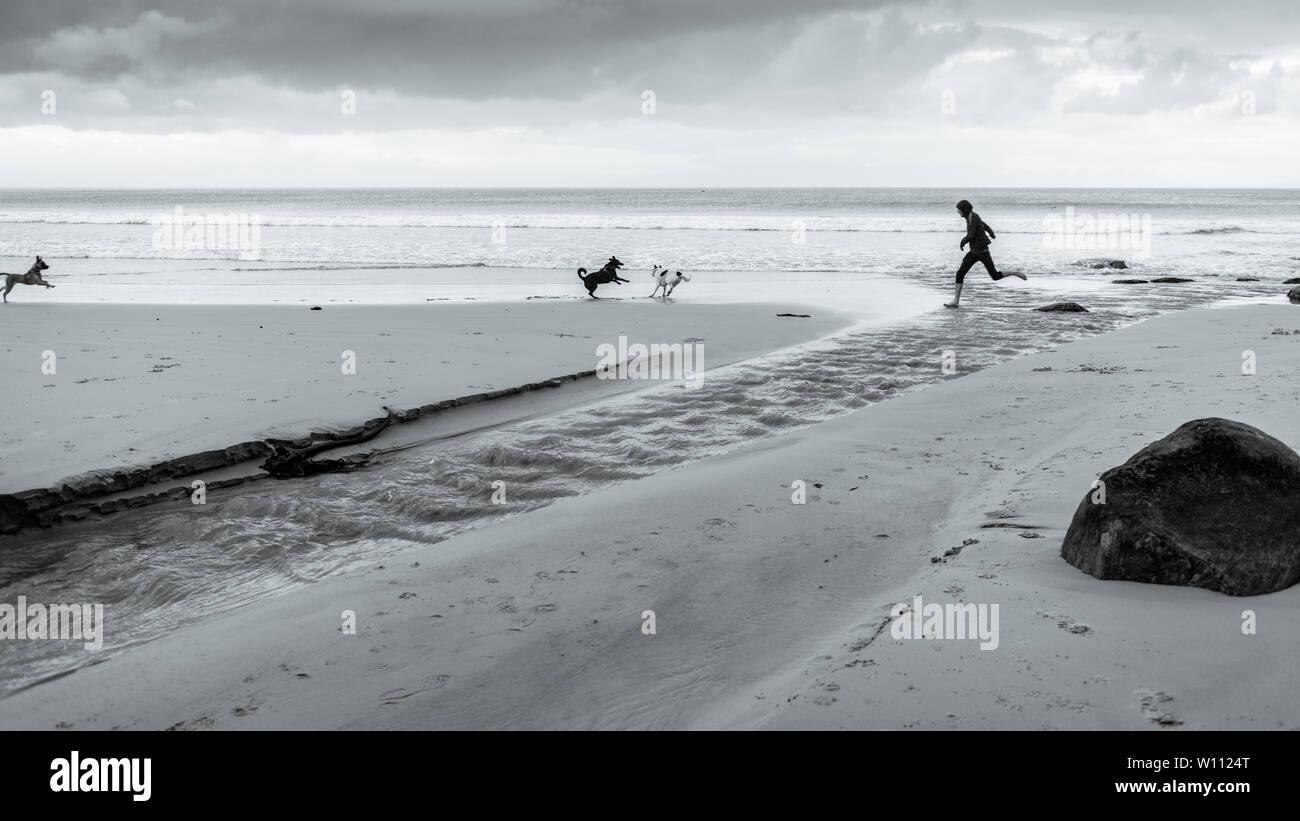 Corriendo con los perros a lo largo de la playa de Glencairn en Sudáfrica es False Bay costa, cerca de Ciudad del Cabo, durante los meses de invierno del país. Imagen De Stock