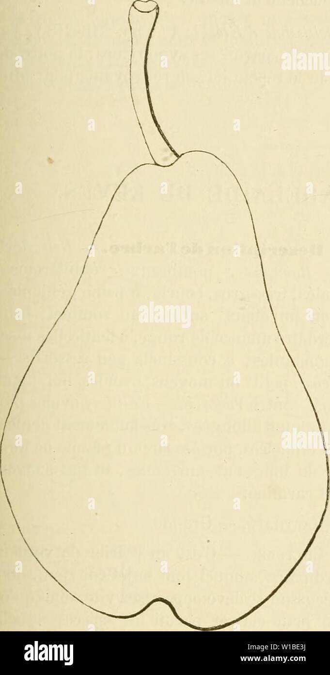 Imagen de archivo de la página 378 del Dictionnaire de pomologie, contenant l'histoire. Dictionnaire de pomologie, contenant l'histoire, la descripción, la figura frutas des anciens et des modernes frutos les plus connus gÂnÂralement et cultivÂs . dictionnairedepo02lero Año: 1867 MAD 369 642. Poire de Madame. Synonymes. Â poires : 1. De Hallum ( Herman Fructolcgie Knoop, 1771, 2e partie, págs. 84-85). Â 2. Bonne Hallemine {Id Ibíd.; et Decaisne, Le Jardin du MusÃum afrutado de lo habitual, 18S8, t. I). Â 3. Windsor (Liadley, guía de la huerta y cocina de vanguardia.n, 1831, pág. 350, d' 39 ; _ et Decaisne, le Jardi Foto de stock