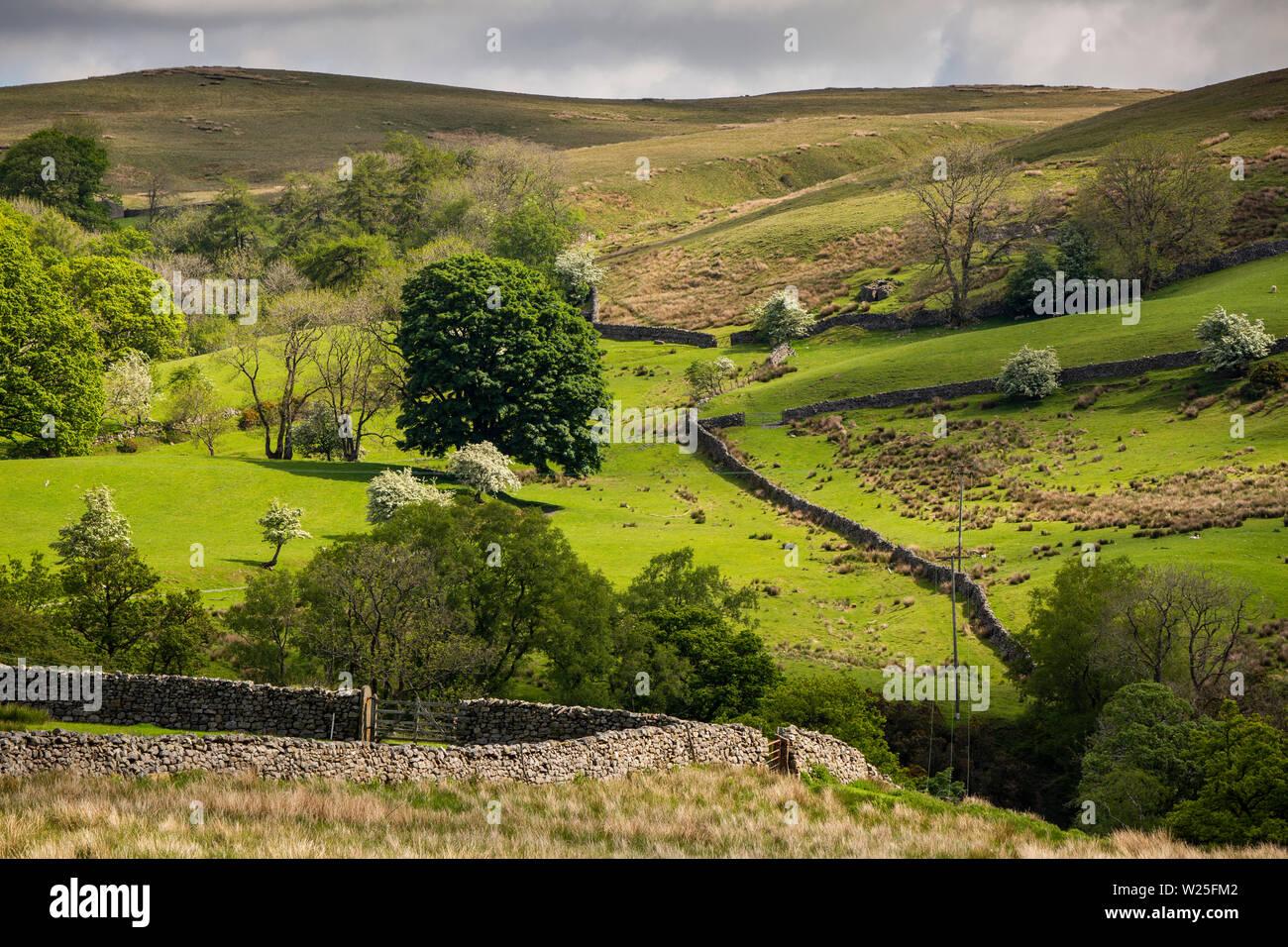 Sedbergh, Cumbria, Reino Unido, y Frostrow Soolbank, tierras bajas separadas por paredes drystone debajo Howgill Fells Foto de stock
