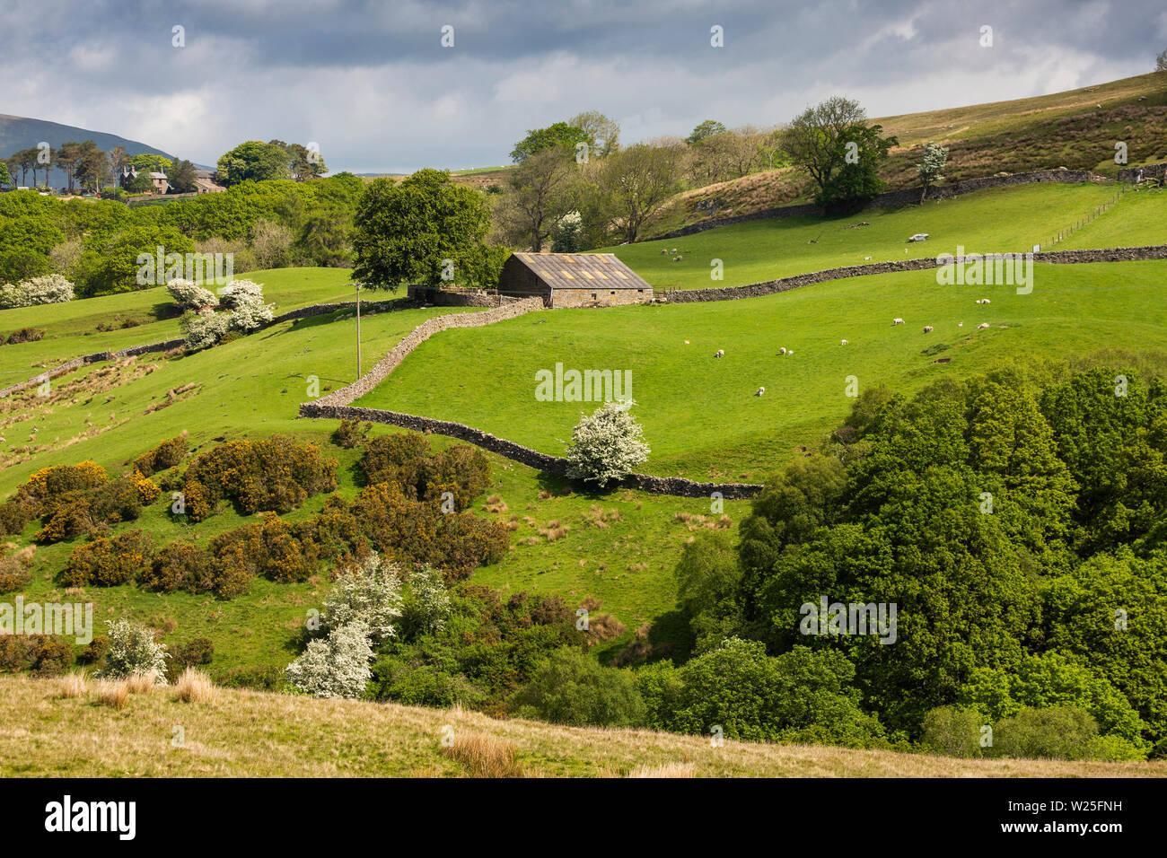 Sedbergh, Cumbria, Reino Unido, y Frostrow Soolbank, bajo campo Fawes granero en tierras bajas en Palomar Gill Foto de stock