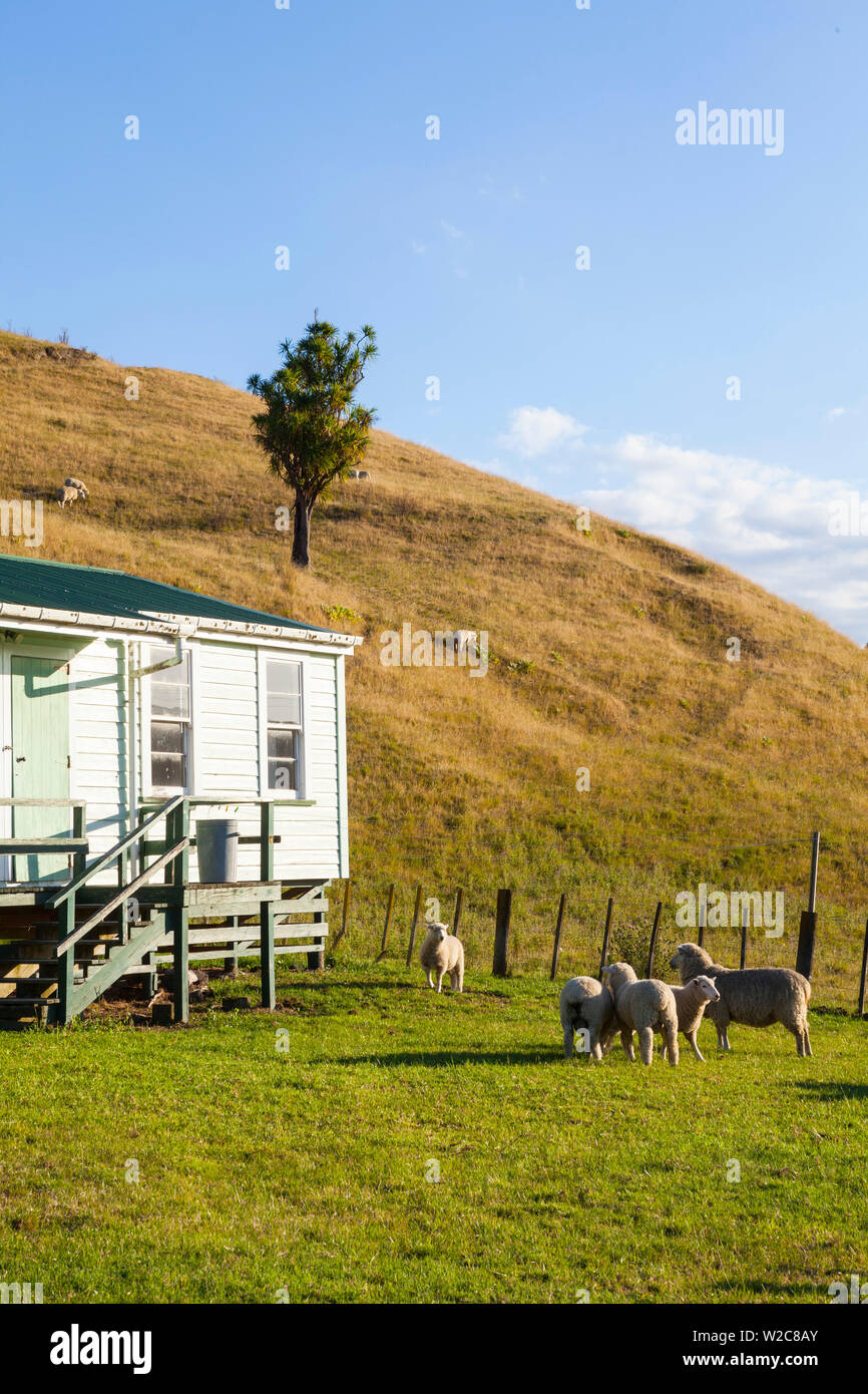 Alojamiento de los esquiladores, Tologa Bay, East Cape, Isla del Norte, Nueva Zelanda Imagen De Stock
