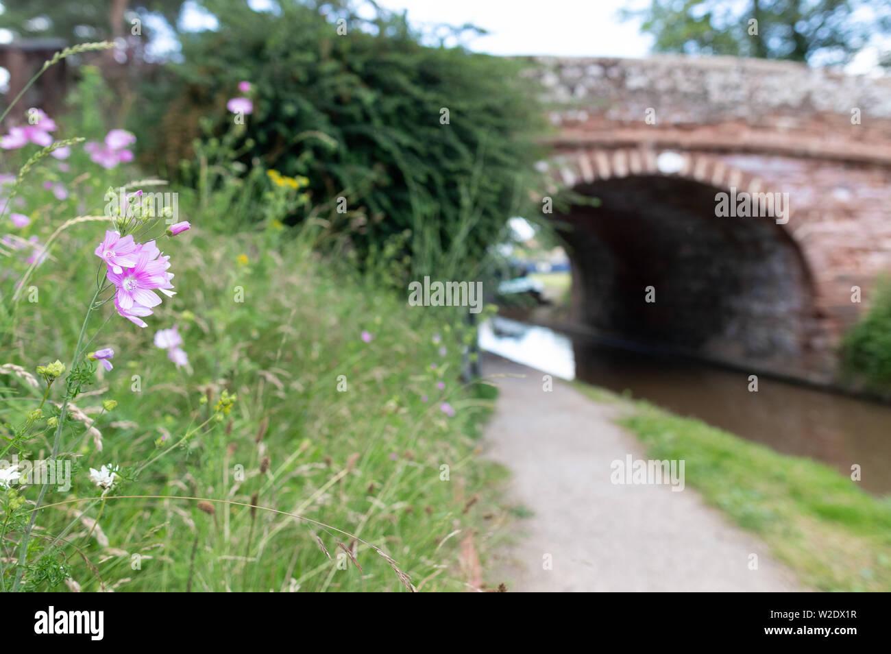 Vistas a lo largo de la Shropshire Union Canal cerca de Market Drayton en Shropshire, REINO UNIDO incluyendo puente puente 62 y 63 y el Talbot Wharf y barcazas Foto de stock