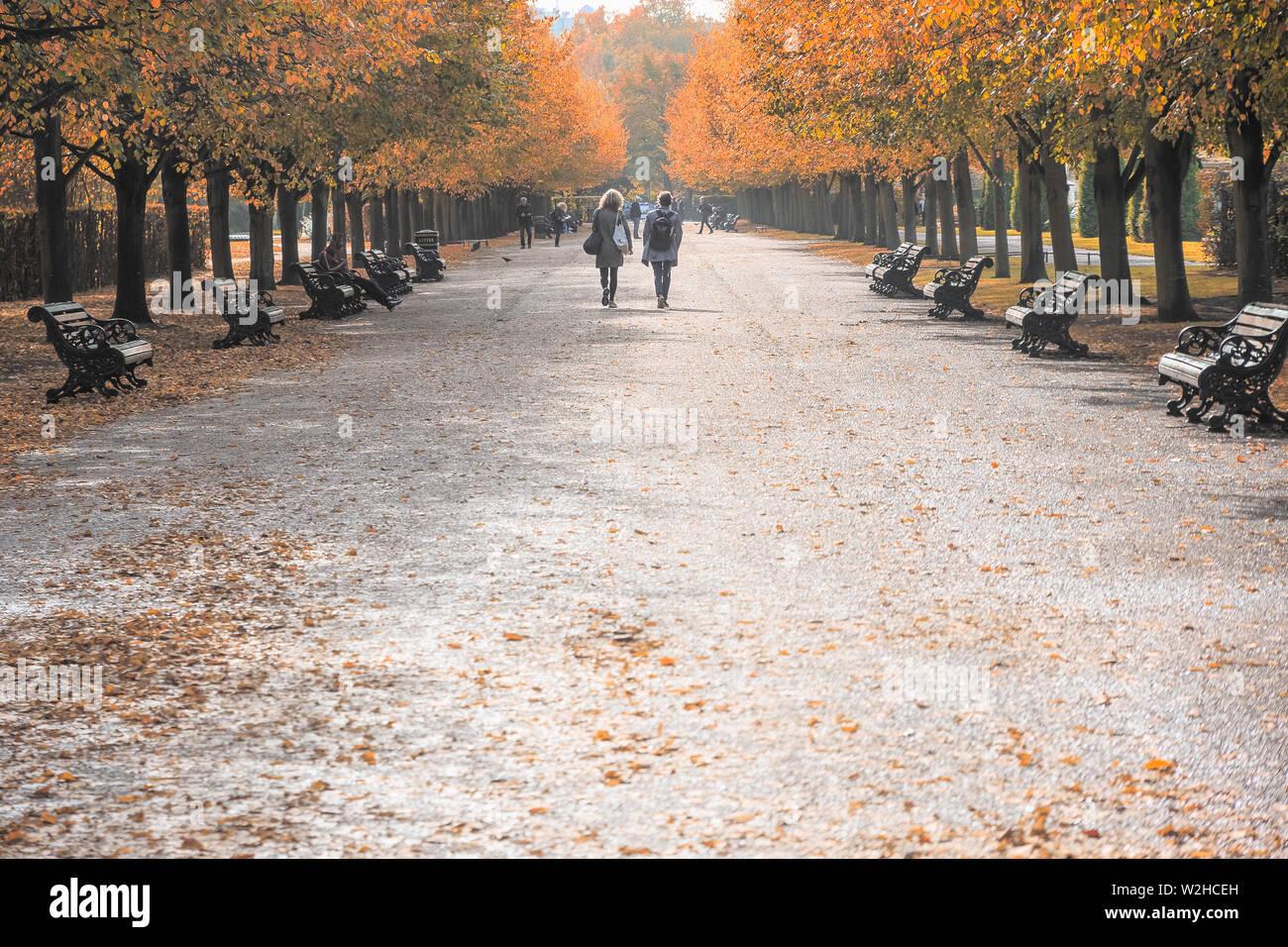Escena de otoño, vista de ángulo bajo avenida arbolada en Regent's Park de Londres. Foto de stock