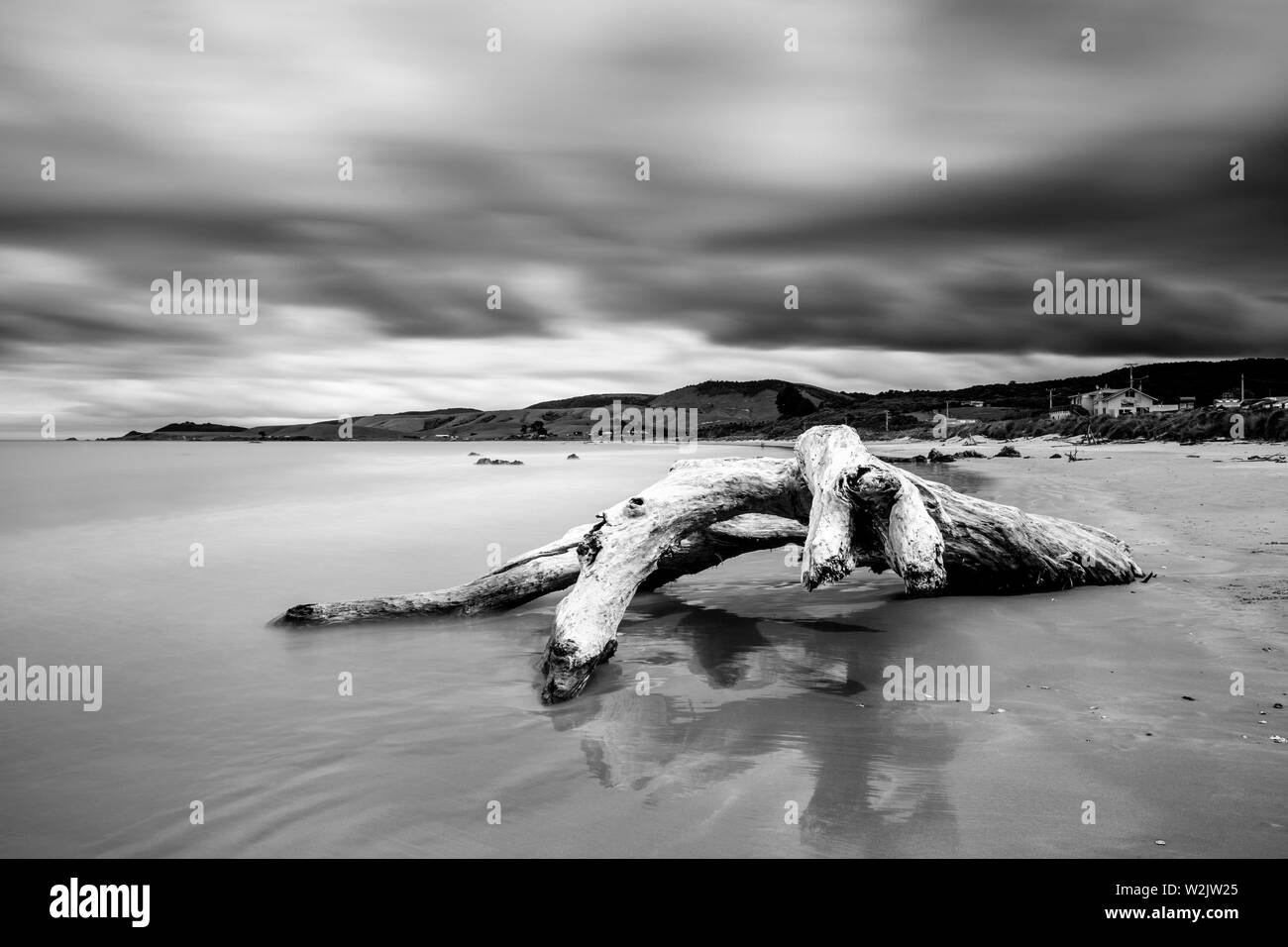 Un árbol muerto en la playa, Kaka Point, los Catlins, Isla del Sur, Nueva Zelanda Foto de stock