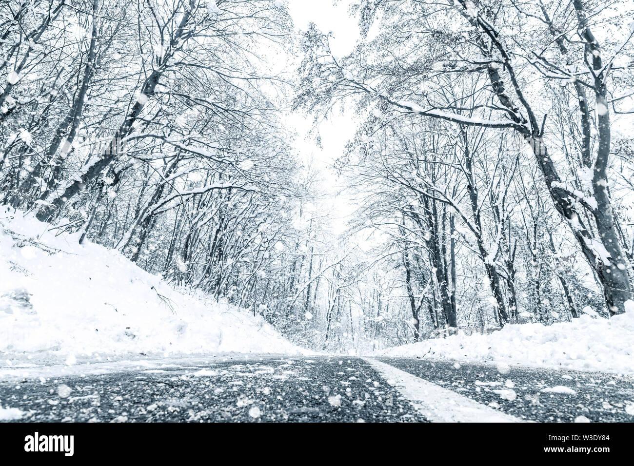 Bosque de invierno Snow Road. Forest Road ver nieve en invierno. Foto de stock