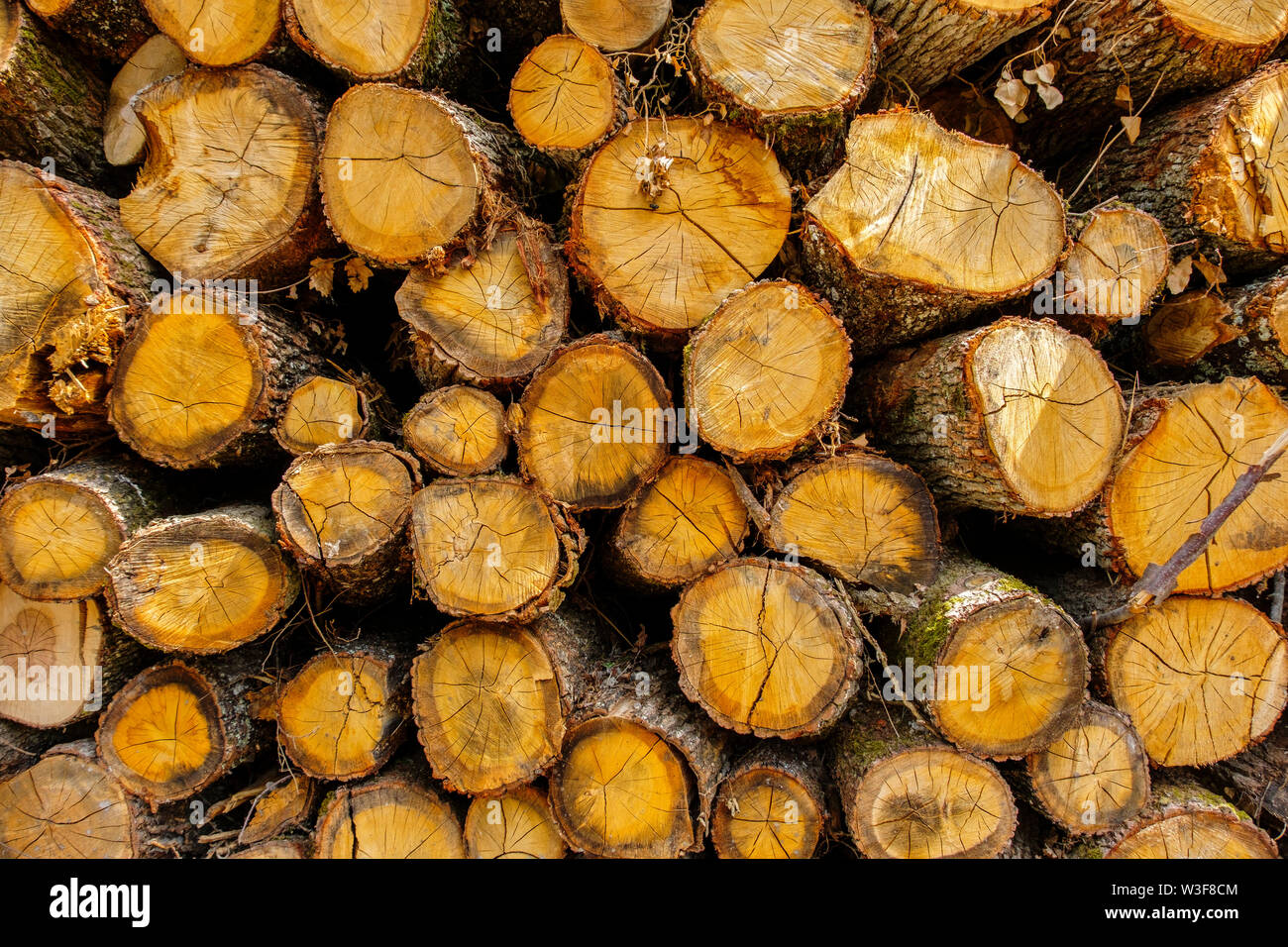 Montón de troncos de madera, Sossay Puygarreau cerca. Vienne, Poitou Charente. Francia Europa Foto de stock