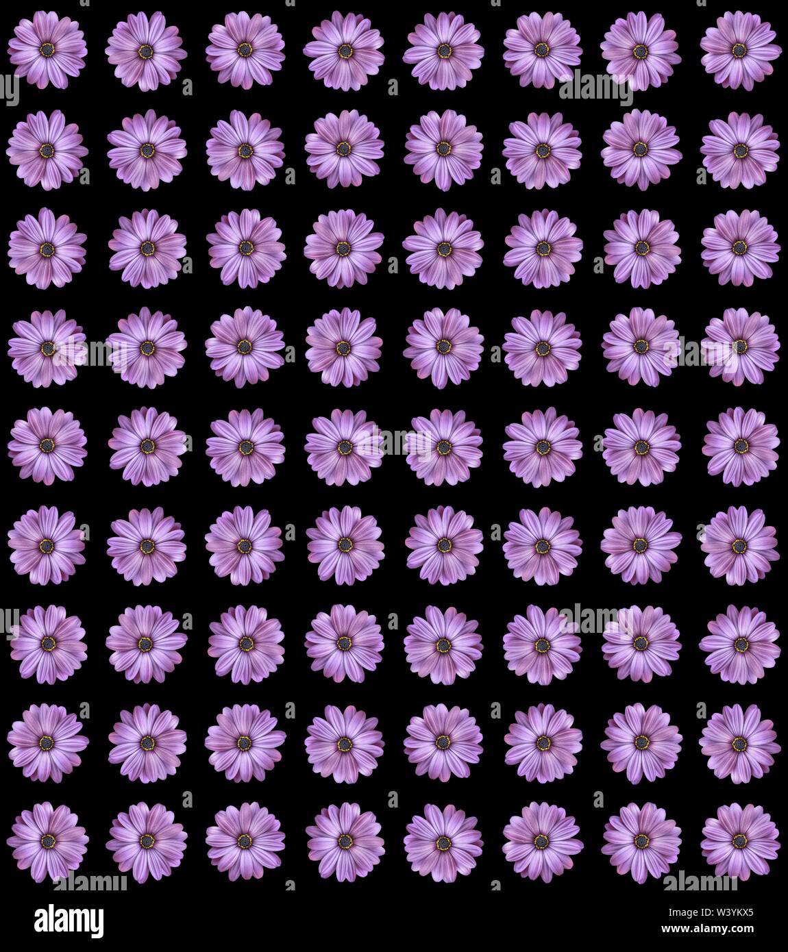 Bouquet de flores de verano, brillantes violetas. Imprimir. Capullos de licitación en filas sobre fondo blanco, patrón natural Imagen De Stock