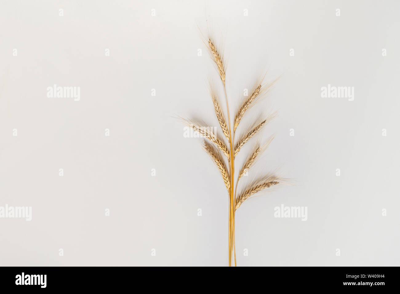 Un puñado de centeno sobre un fondo blanco, vista superior Imagen De Stock