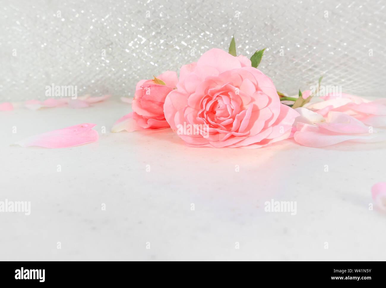 Rosa Y Pétalos De Rosas Sobre Fondo Blanco Perfecto Para