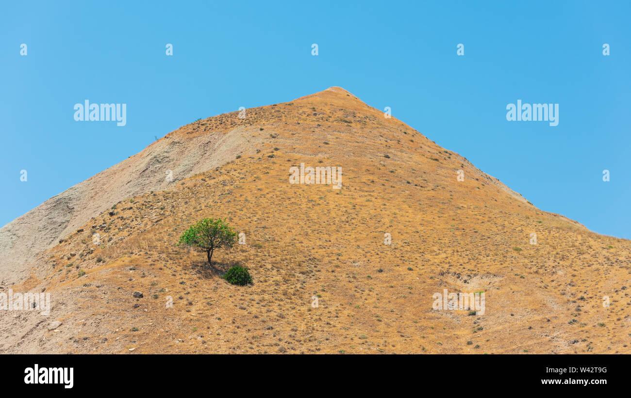 Árbol solitario en la cima de una montaña Foto de stock