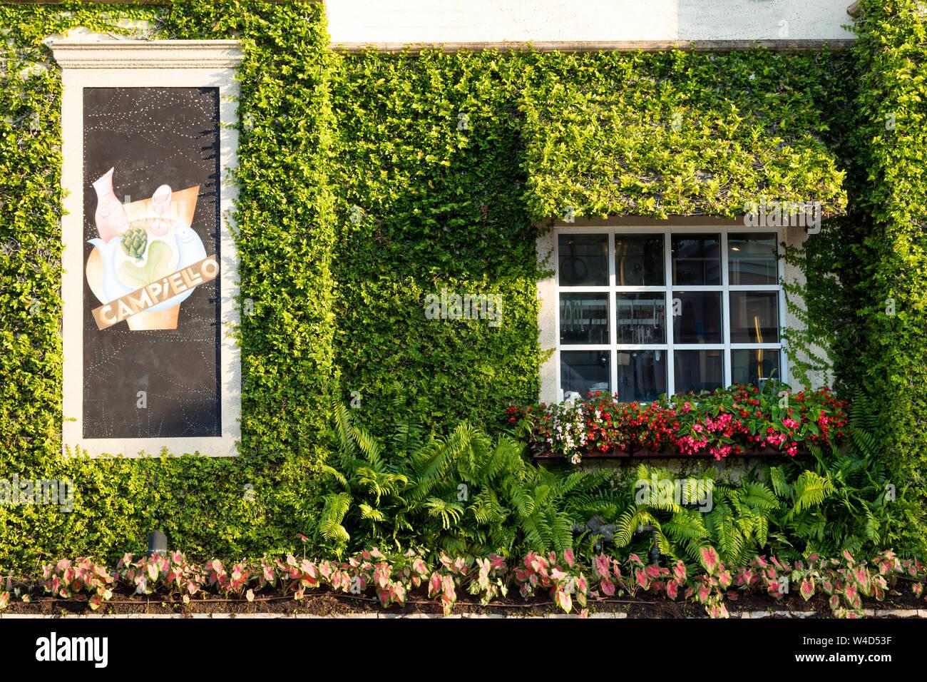 Por la noche la luz solar sobre el muro cubierto de hiedra de Campiellos Restaurante, Naples, Florida, EE.UU. Foto de stock