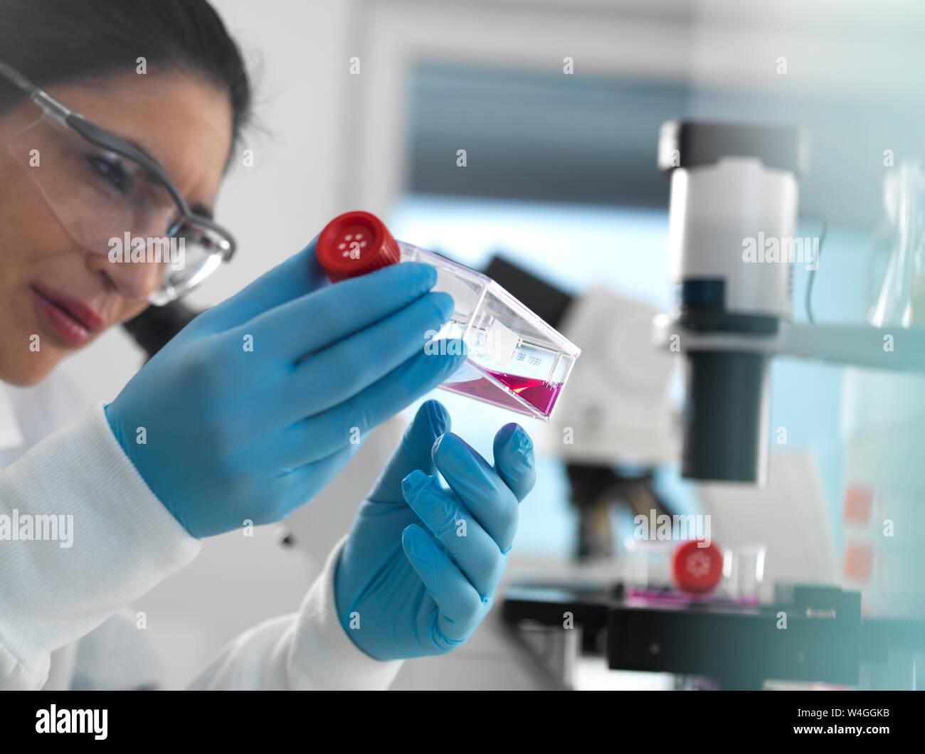 La investigación con células humanas, biólogo celular femenino examinando un matraz conteniendo células madre, cultivadas en rojo el medio de crecimiento en el laboratorio. Foto de stock