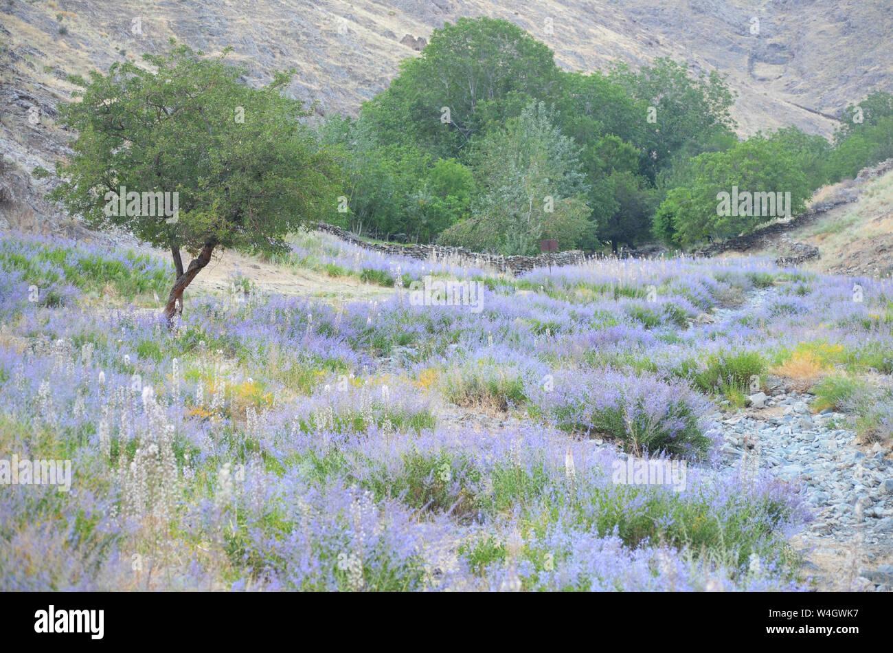 Reserva de Biosfera Nuratau-Kyzylkum Nurata, Montañas, Centro de Uzbekistán Foto de stock