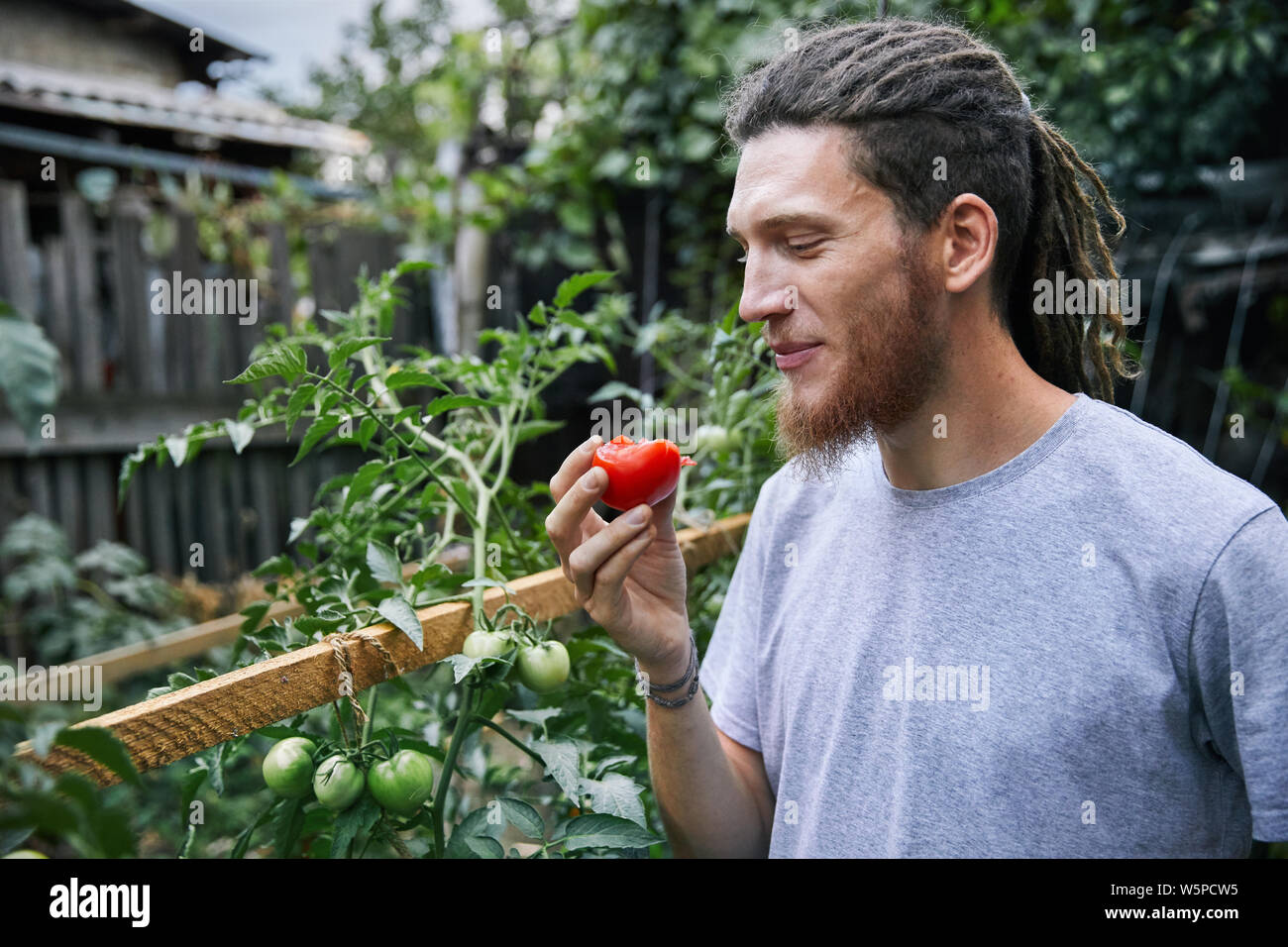 Agricultor barbudo con dreadlocks comer tomate fresco de su invernadero Foto de stock