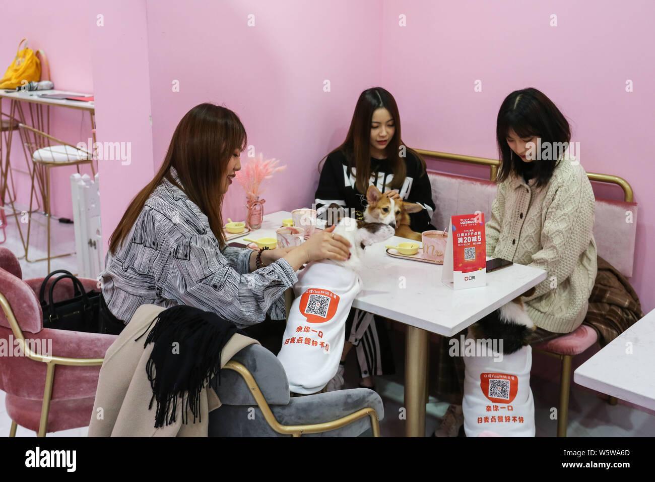 Los clientes interactúan con corgis con códigos QR a través de la app móvil de Alibaba está en línea a fuera de línea (O2O) en la plataforma de servicio de pago online y Koubei servic Foto de stock