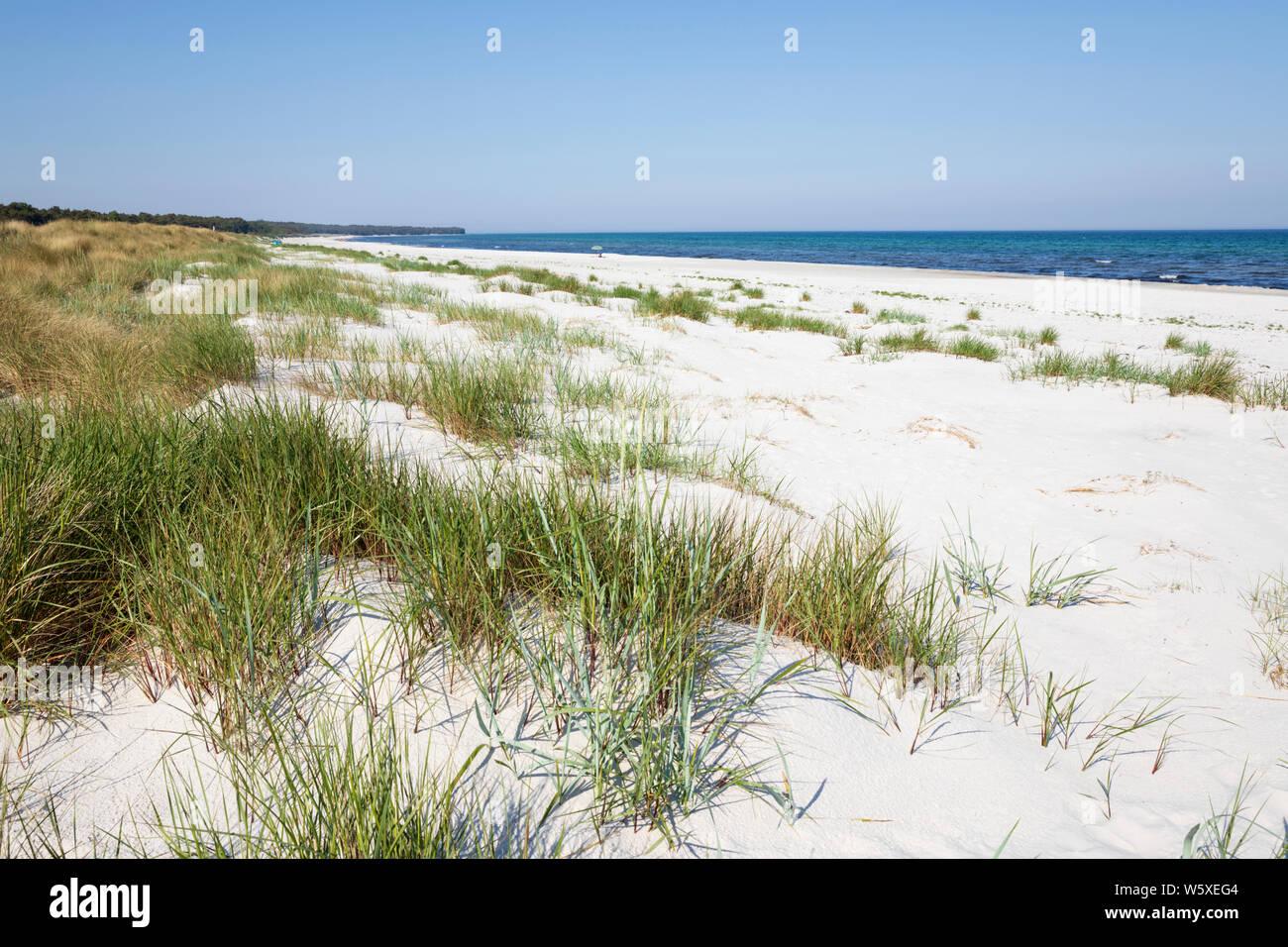 Playa de arena blanca de Dueodde en la costa sur de la isla, Dueodde, la isla de Bornholm, Mar Báltico, Dinamarca, Europa Foto de stock