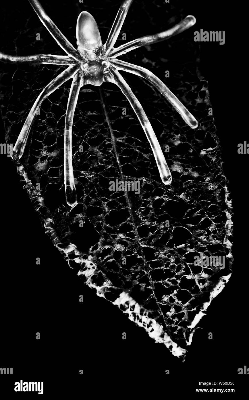 Araña radiactiva sobre una hoja muerta Foto de stock