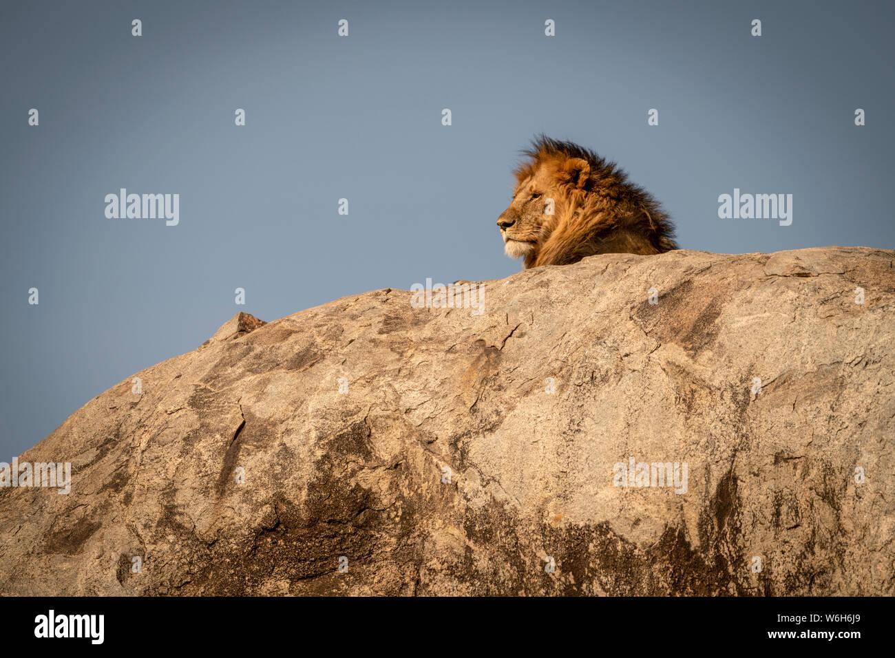 Cabeza de león macho (Panthera leo) tumbado sobre kopje, Parque Nacional del Serengeti, Tanzania Foto de stock