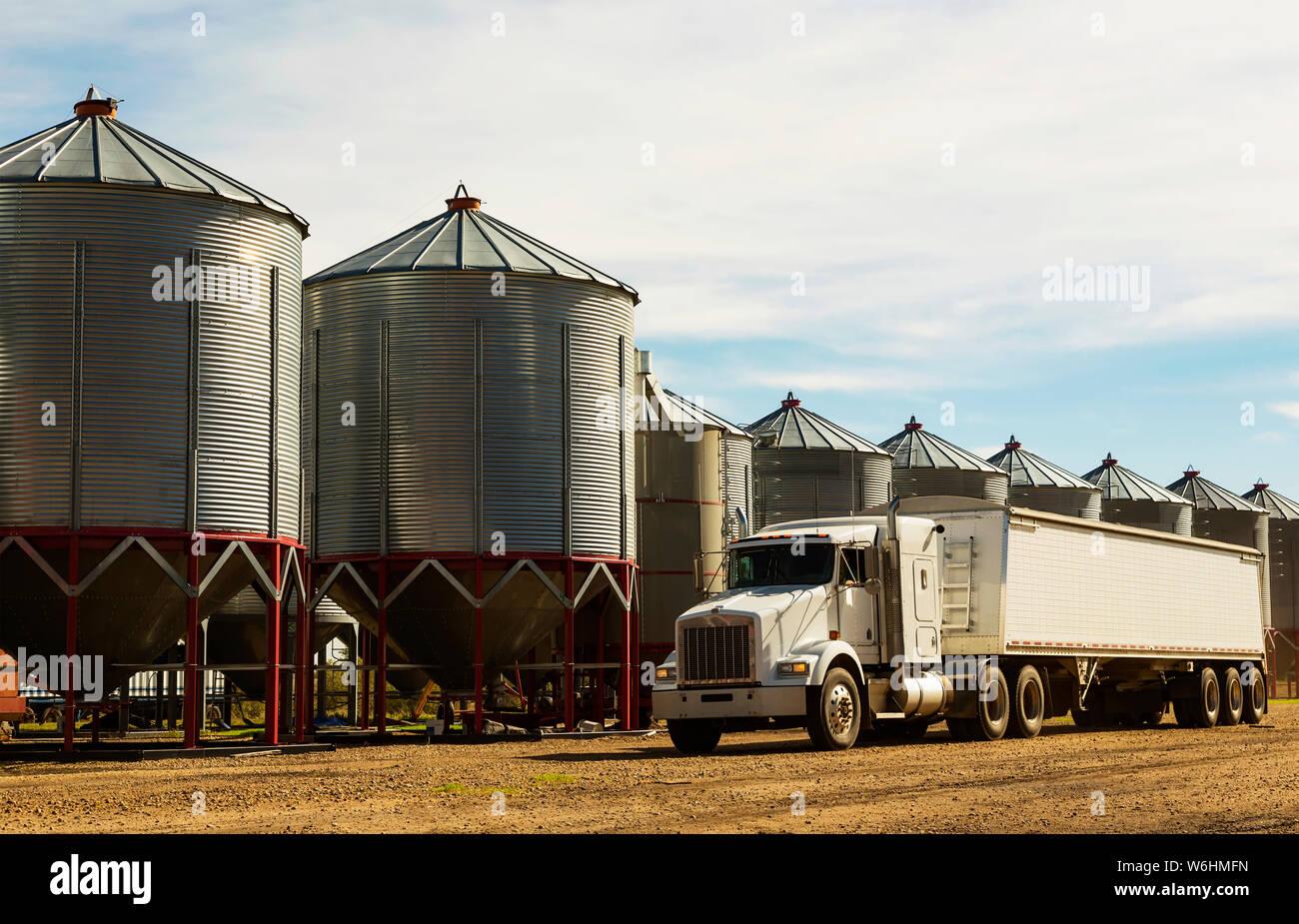 Un grano de un camión estacionado en la parte frontal de silos de metal durante la cosecha; Legal, Alberta, Canadá Foto de stock