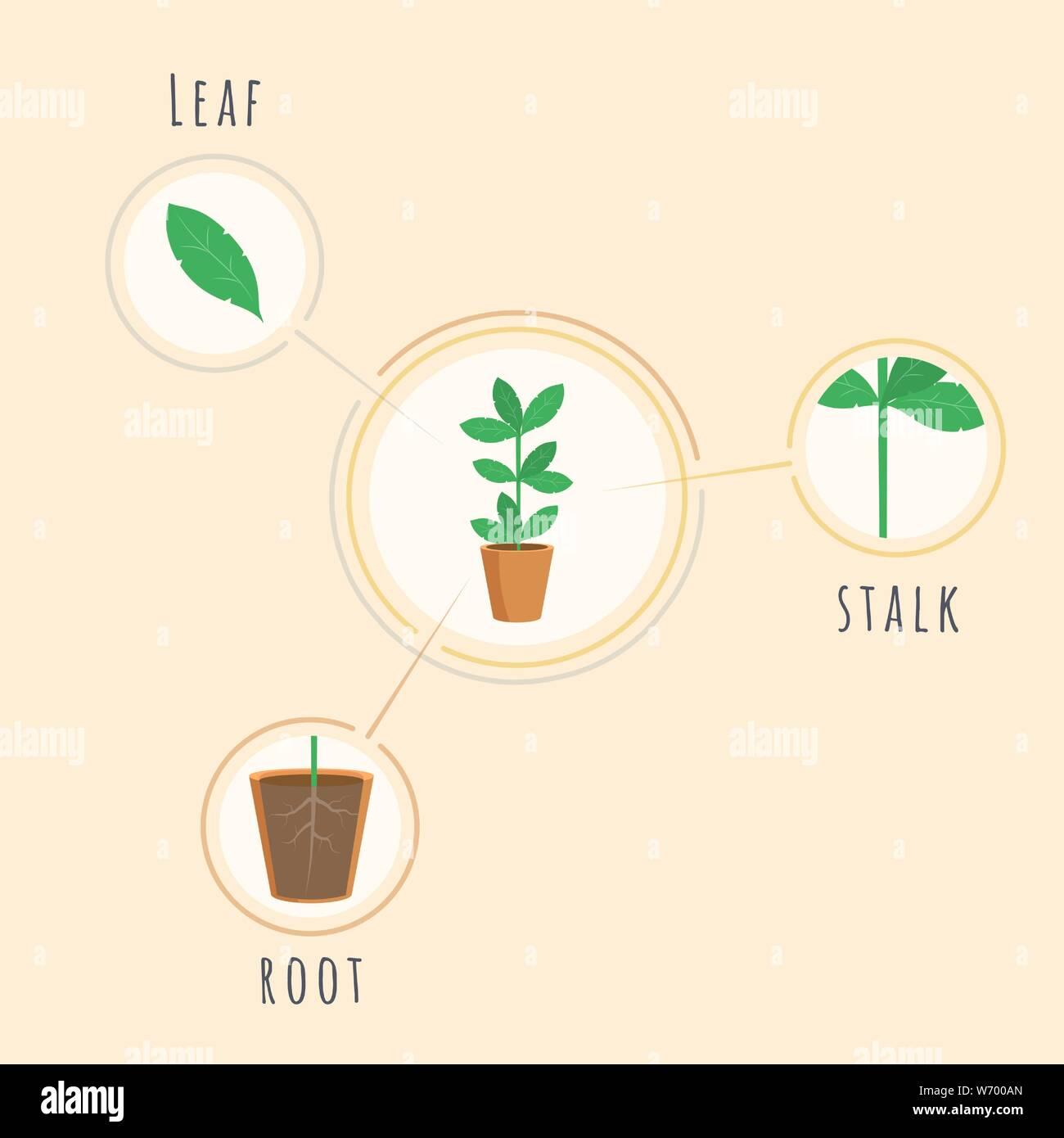 Plano De Estructura De Planta Vector Plantilla De Título