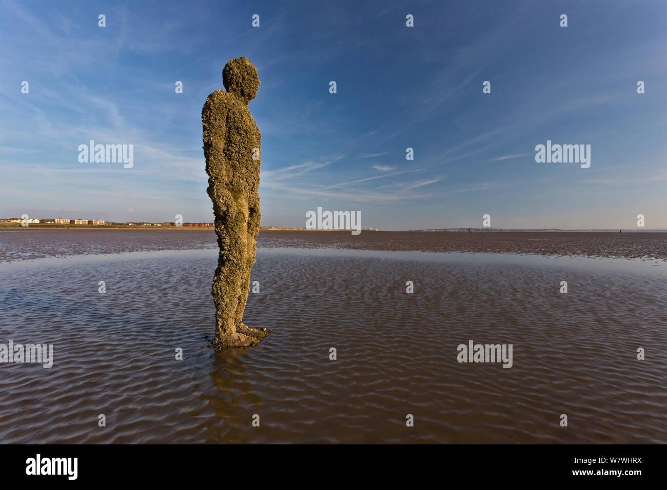 Una figura de Antony Gormley's 'Otro lugar' instalación cubierta de percebes, incluidas las invasoras Austrominius modestus. Crosby, Merseyside, Reino Unido, abril de 2014. Foto de stock