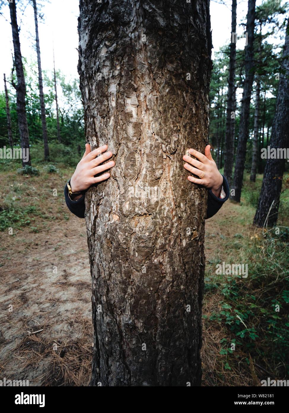 Mujer abraza tall tree vino con las manos en el Bloemendaal bosque cerca de la playa. Foto de stock