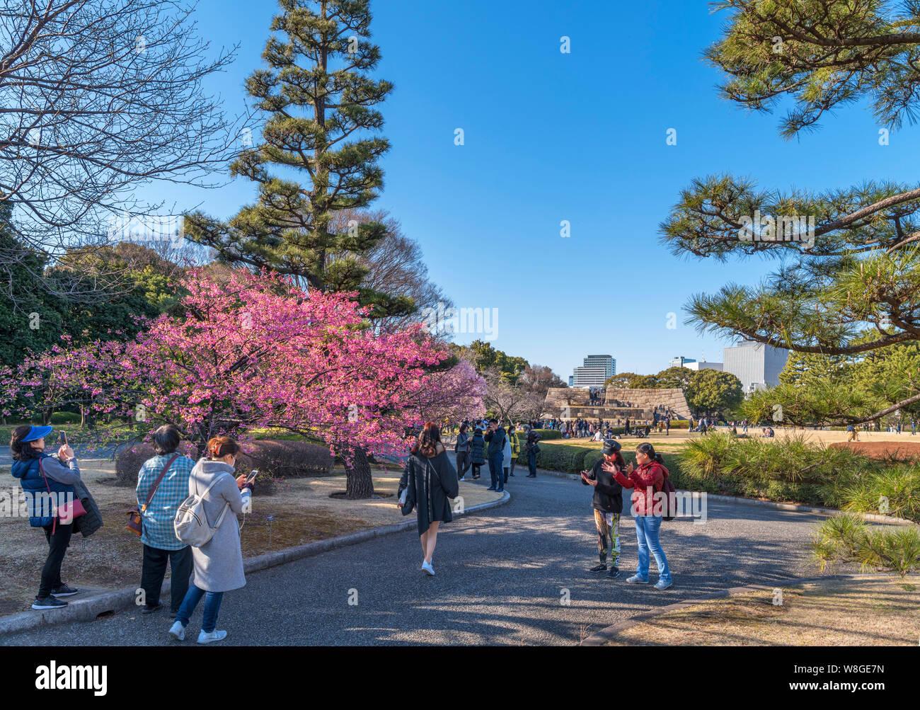 Los visitantes tomando fotos de flor de cerezo con el sitio del Castillo de Edo mantener en la distancia, East Gardens, el Palacio Imperial, Tokio, Japón Foto de stock