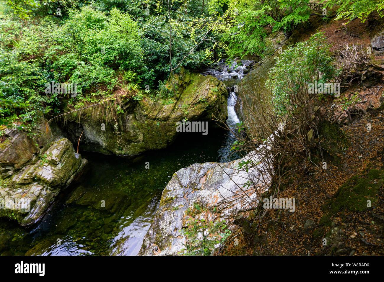 Árboles, lagos y arroyos en Tollymore Park, Irlanda Foto de stock