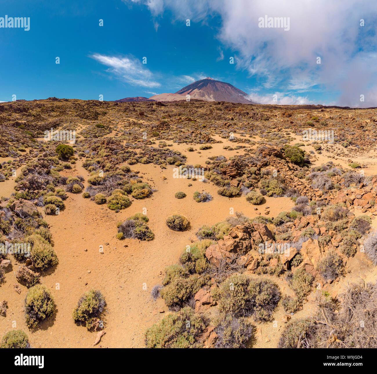 Las Cañadas del Teide, La Orotava, Santa Cruz de Tenerife, Islas Canarias, España Tenrife, 30071230 *** título Local *** paisaje, verano, monte Foto de stock