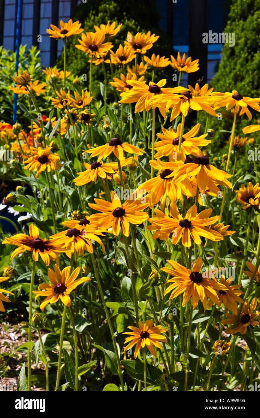 Las flores nacen en un astillero en STONINGTON un importante puerto de pesca de langosta y destino turístico - Deer Island, Maine Foto de stock
