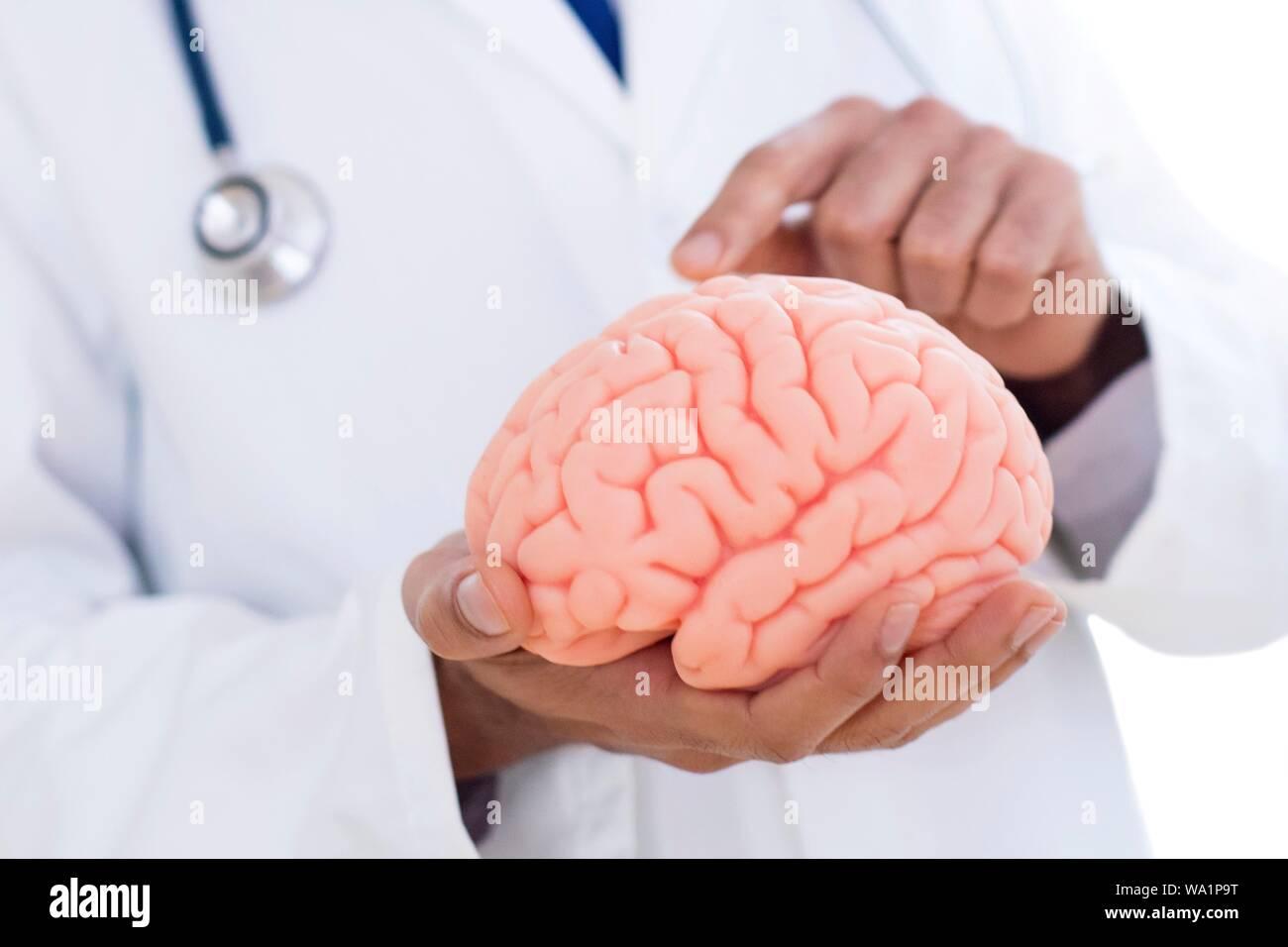 Neurólogo apuntando al cerebro, modelo de cerca. Foto de stock