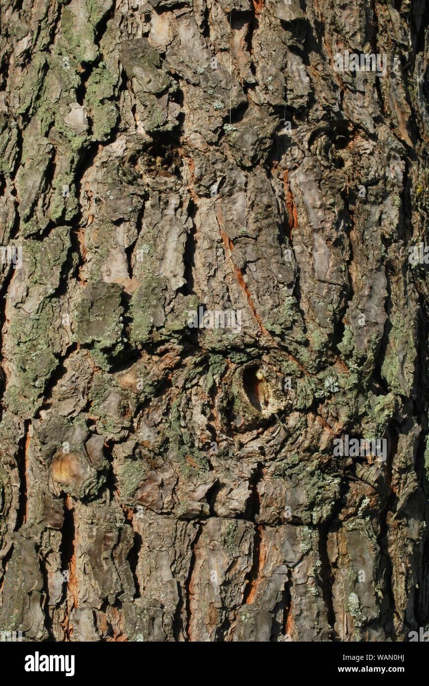 Detalle del tronco de un árbol Foto de stock