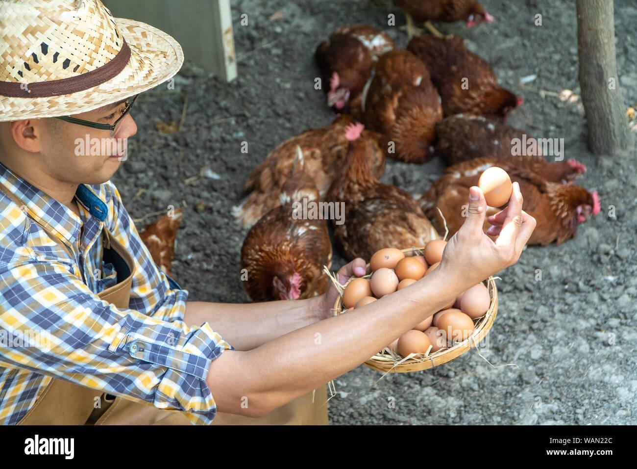 Joven agricultor inteligente plaid desgaste camisa manga larga delantal marrón están sujetando el pollo fresco huevos en canasta en una granja de pollos en él área de inicio Foto de stock