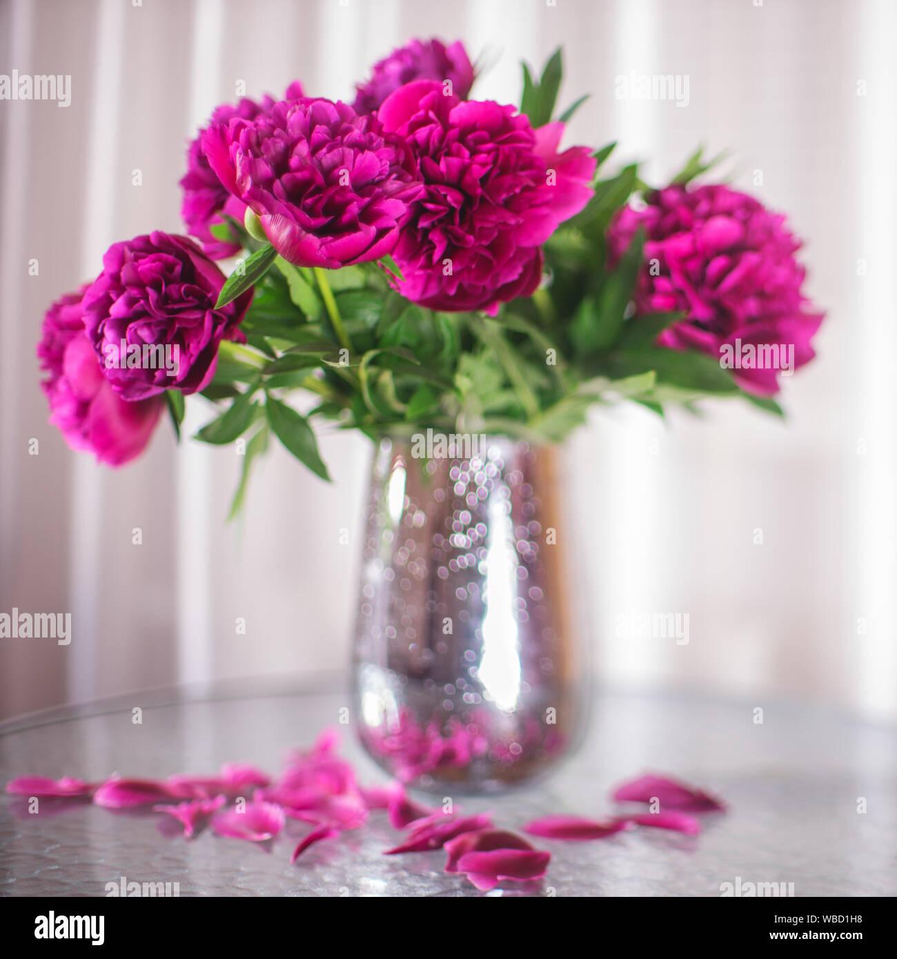 Bouquet de peonías flores rosa oscuro en un florero Foto de stock