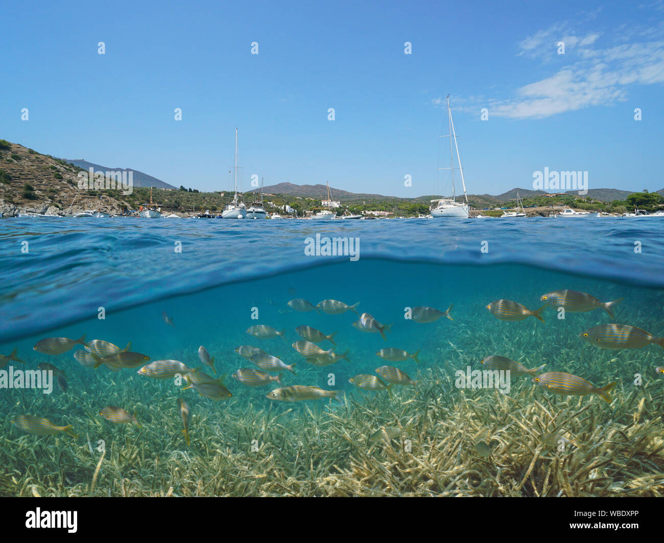España Costa Brava Cadaqués, barcos amarrados en la bahía de Portlligat con peces y algas submarinas, Mar Mediterráneo, vista dividida por encima y por debajo de la superficie Foto de stock