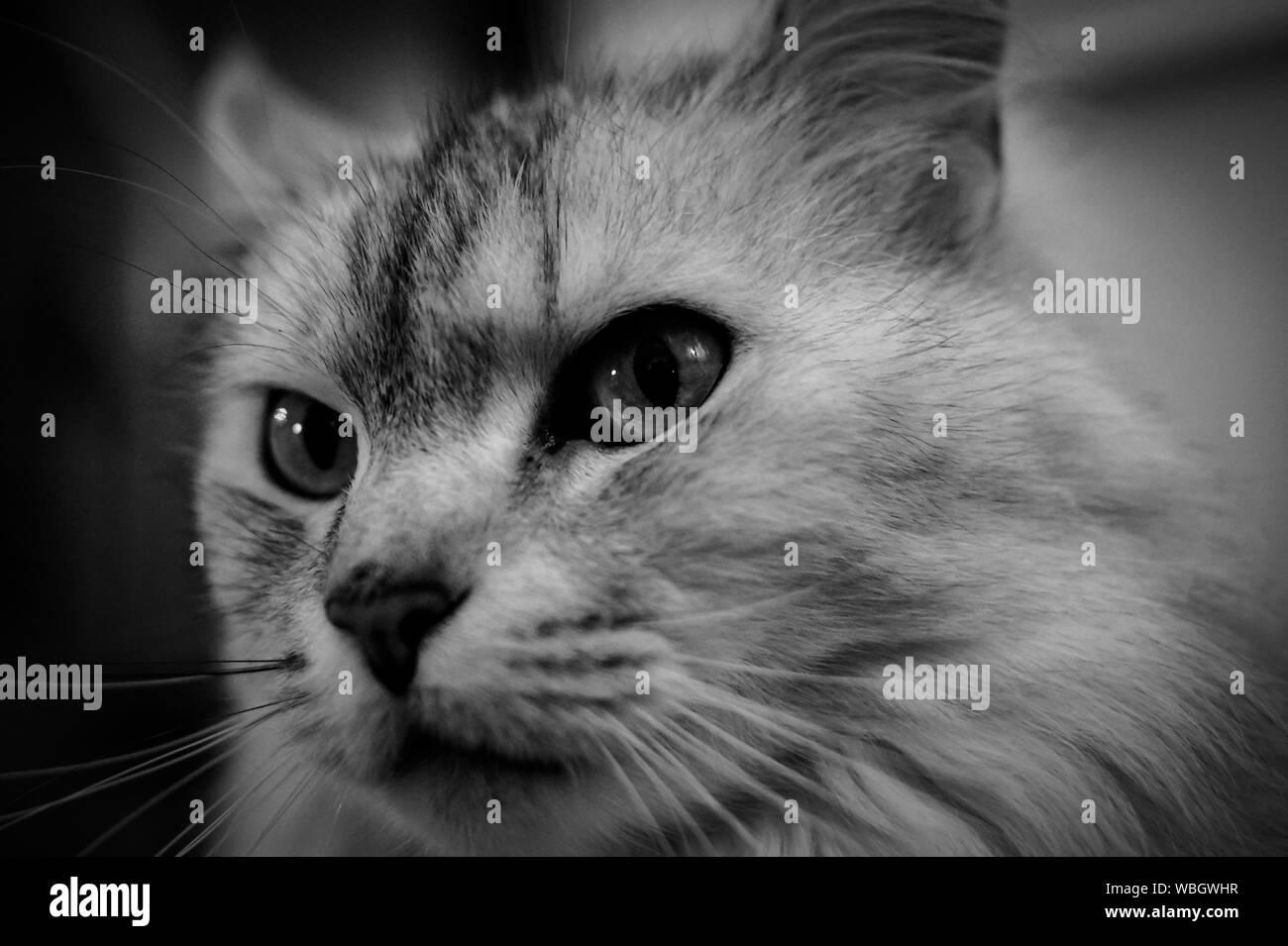 Close-up retrato de cat. Foto de stock