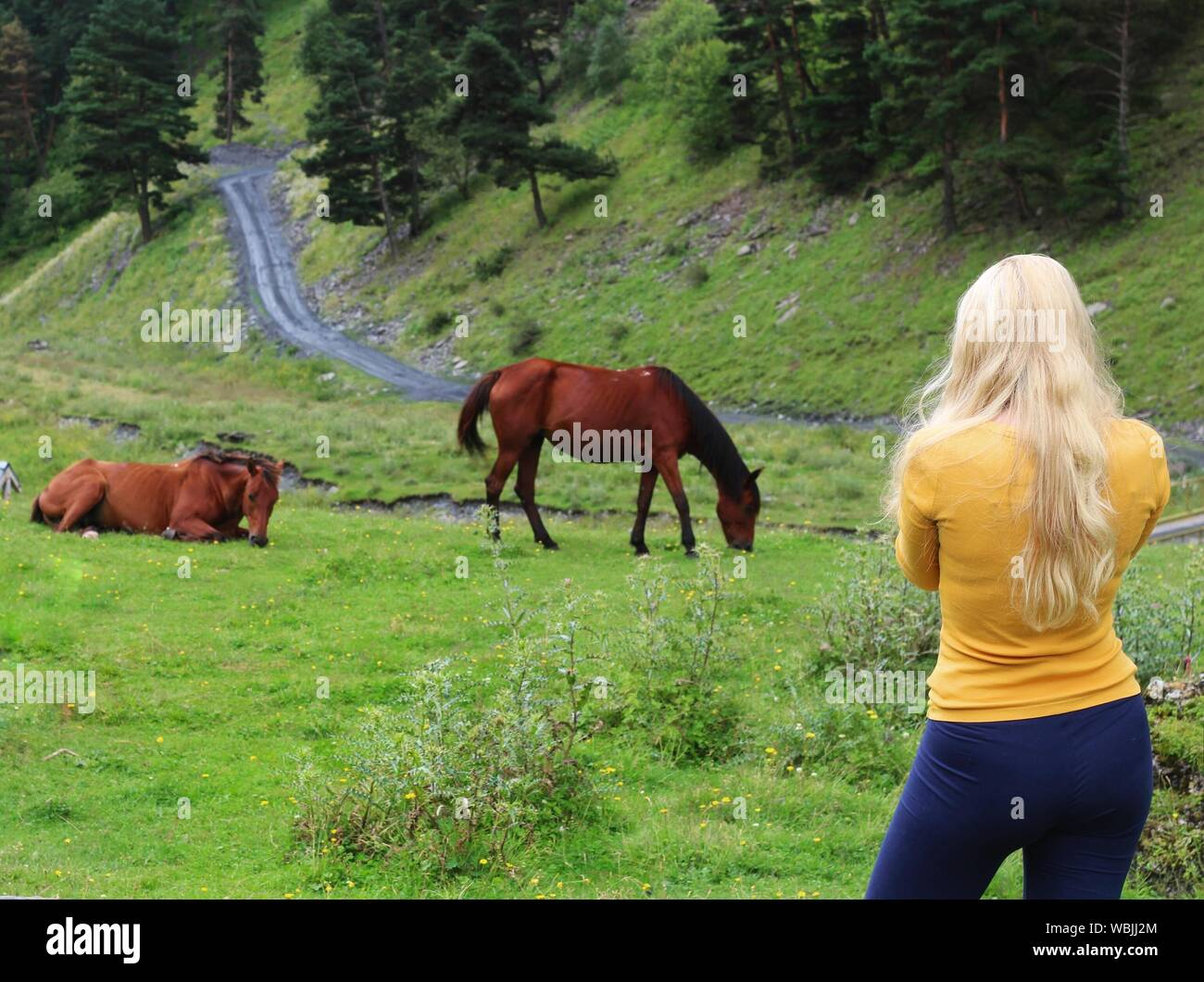 Vista trasera de la Mujer de pie en el campo contra Caballos Foto de stock