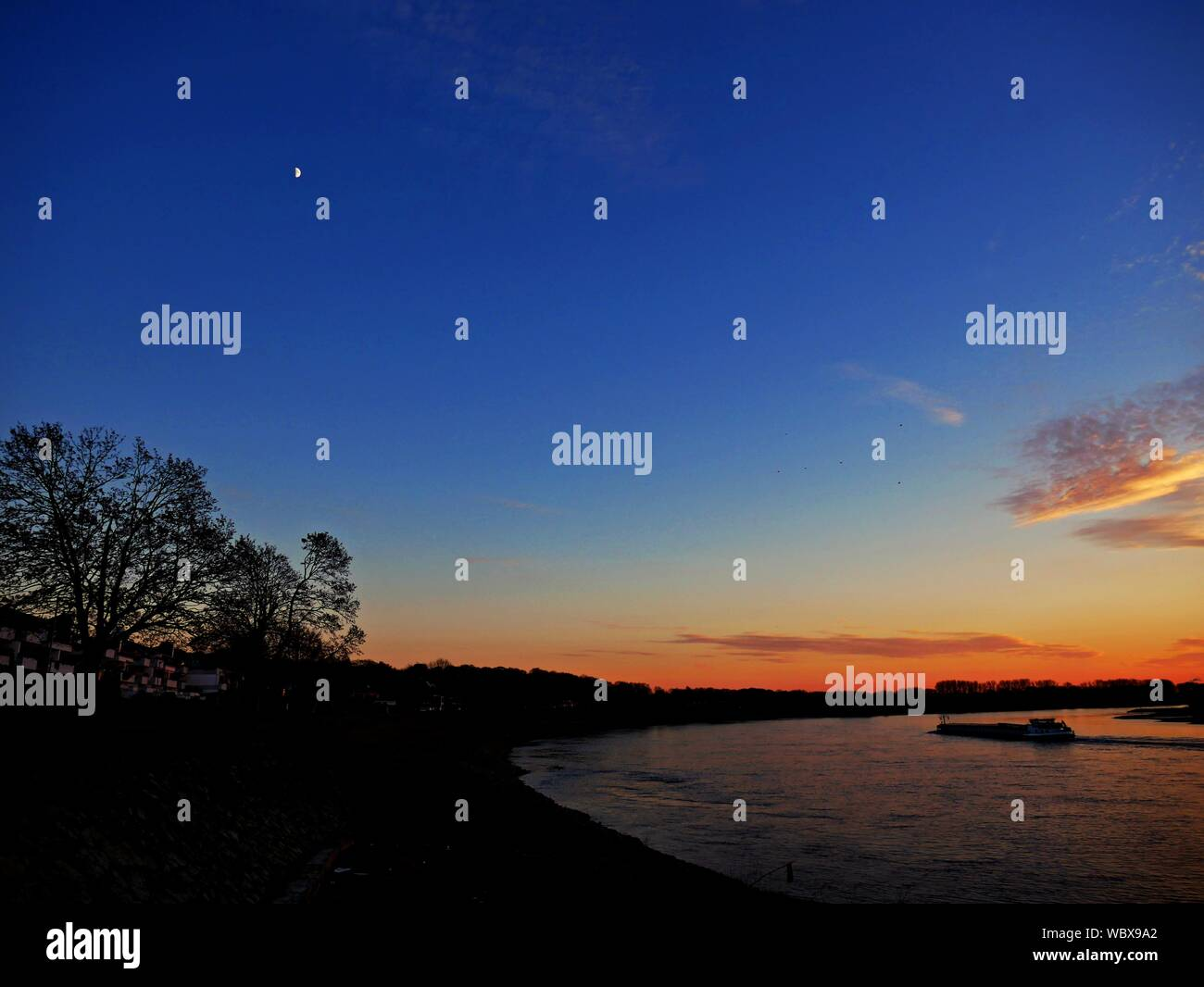 Vista panorámica de la silueta de los árboles contra el cielo durante la puesta de sol Foto de stock