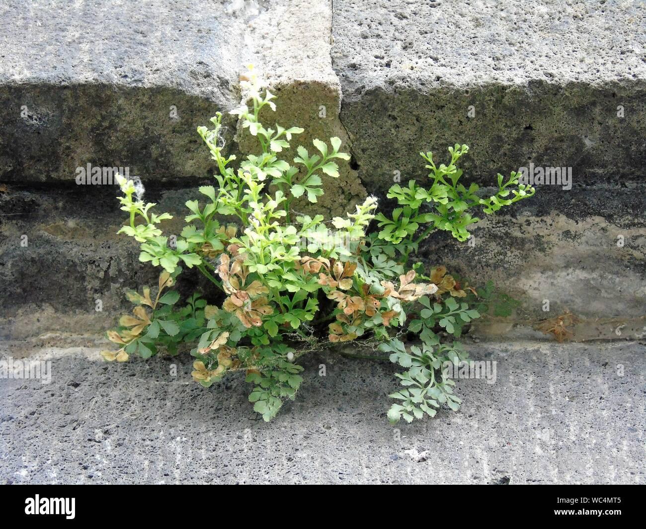 Cerca de las plantas Foto de stock