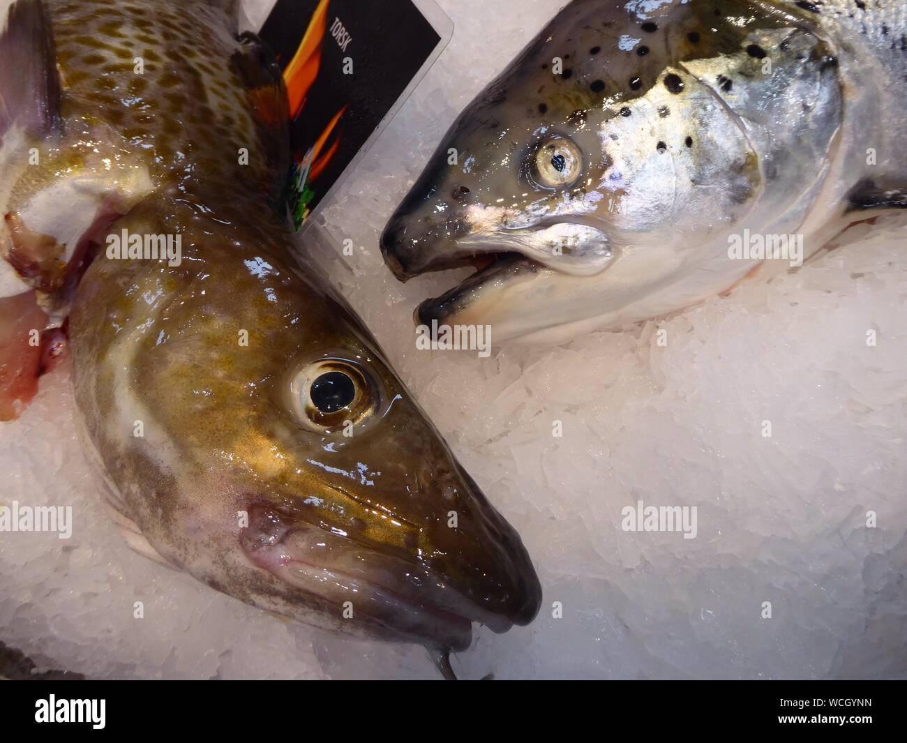 Close-up de pescado en hielo picado en el mercado Foto de stock