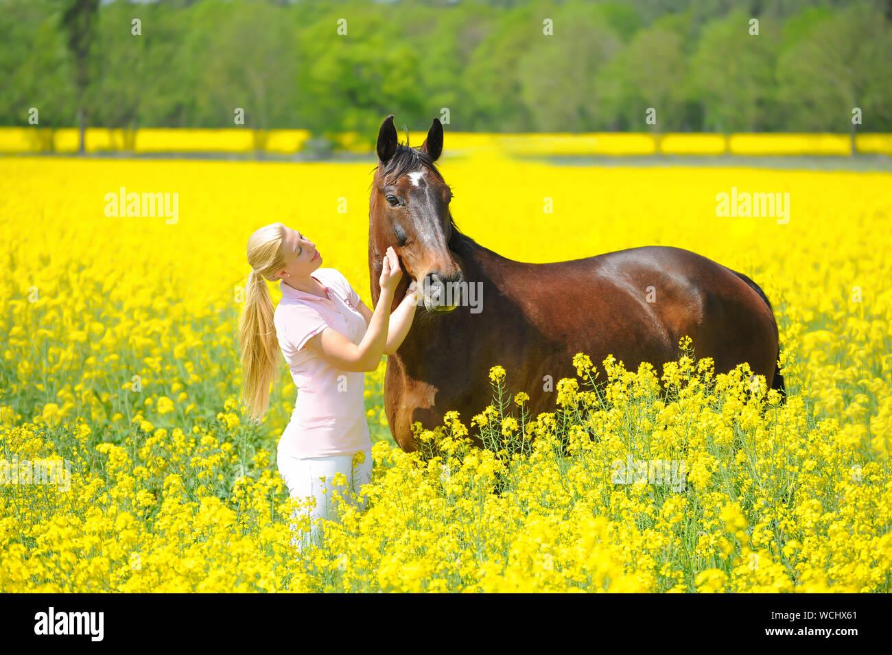 Mujer joven acariciando Caballo Mientras parado a cosechar el campo Foto de stock