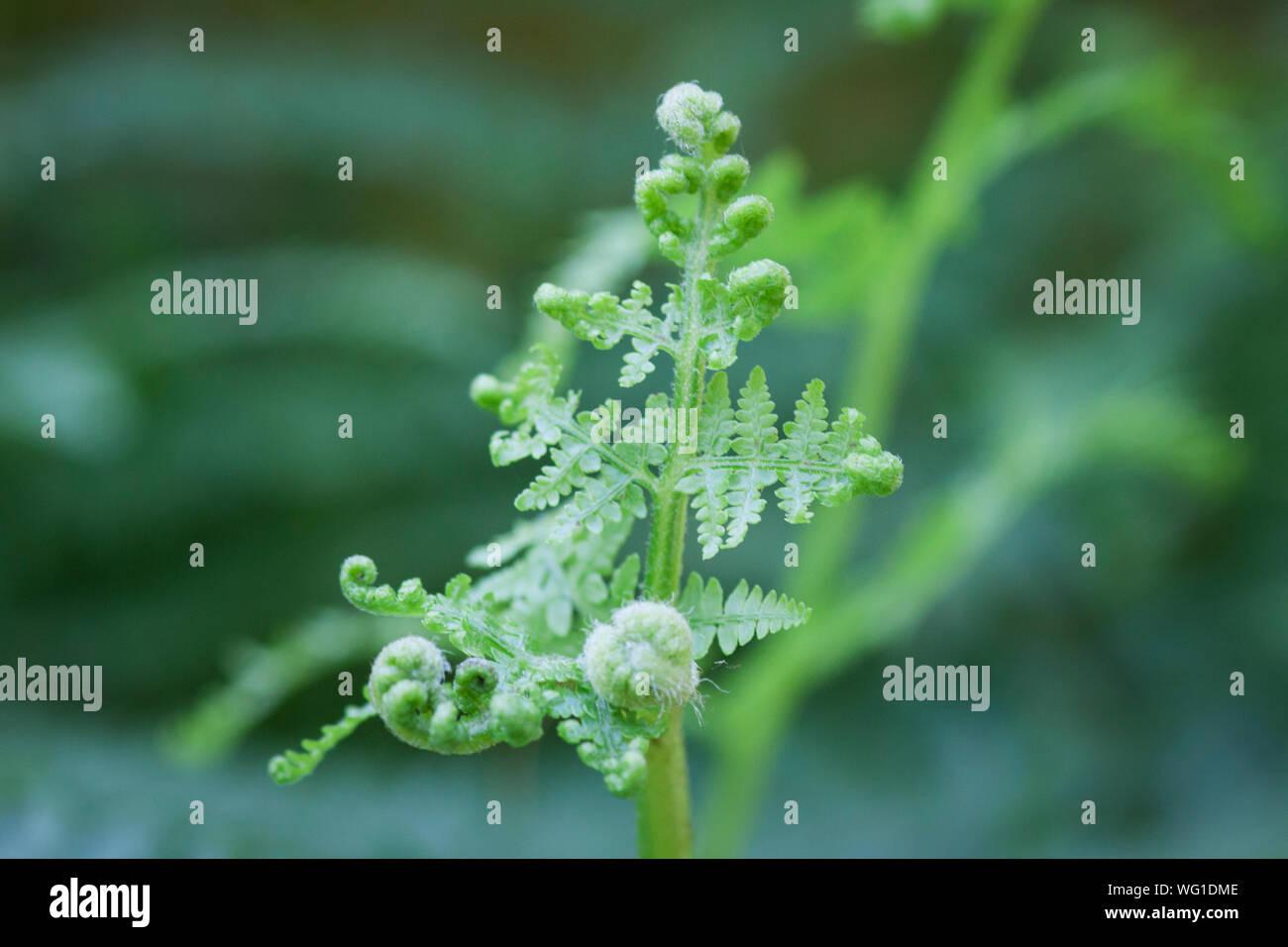 Cierre de planta verde fresco Foto de stock