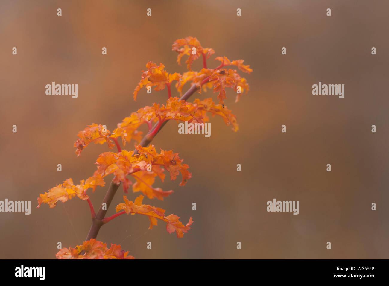 Close-up de flores de naranja en el árbol Foto de stock