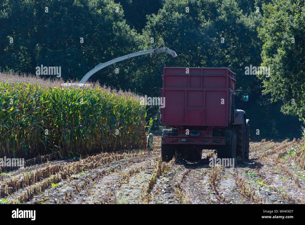 Cosechadora cosecha en la granja Foto de stock