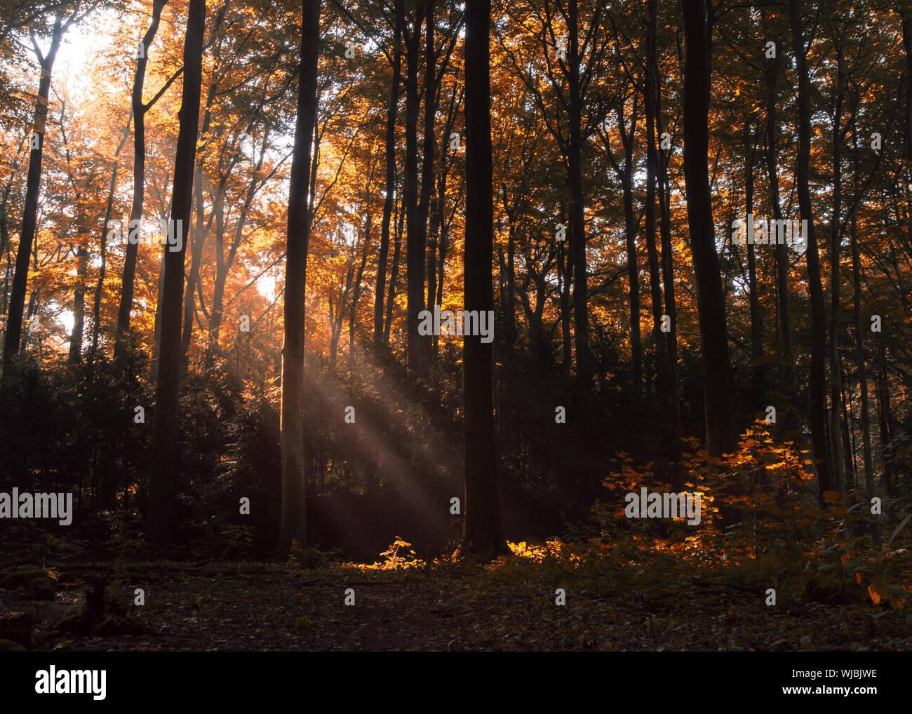 Los árboles en el bosque durante el otoño Foto de stock