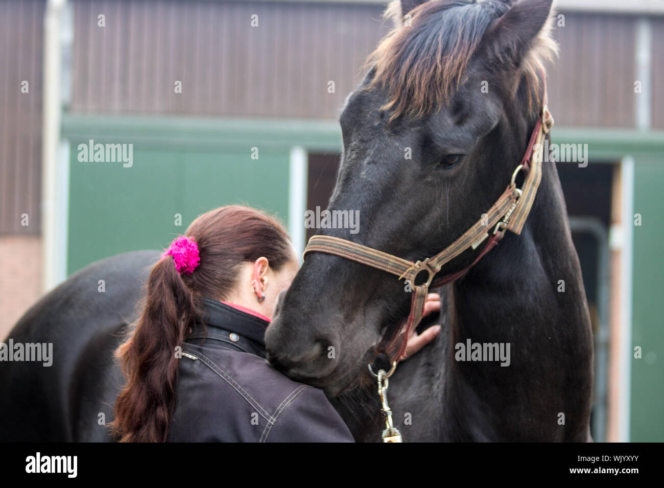 Vista trasera de la Mujer de pie a caballo Foto de stock