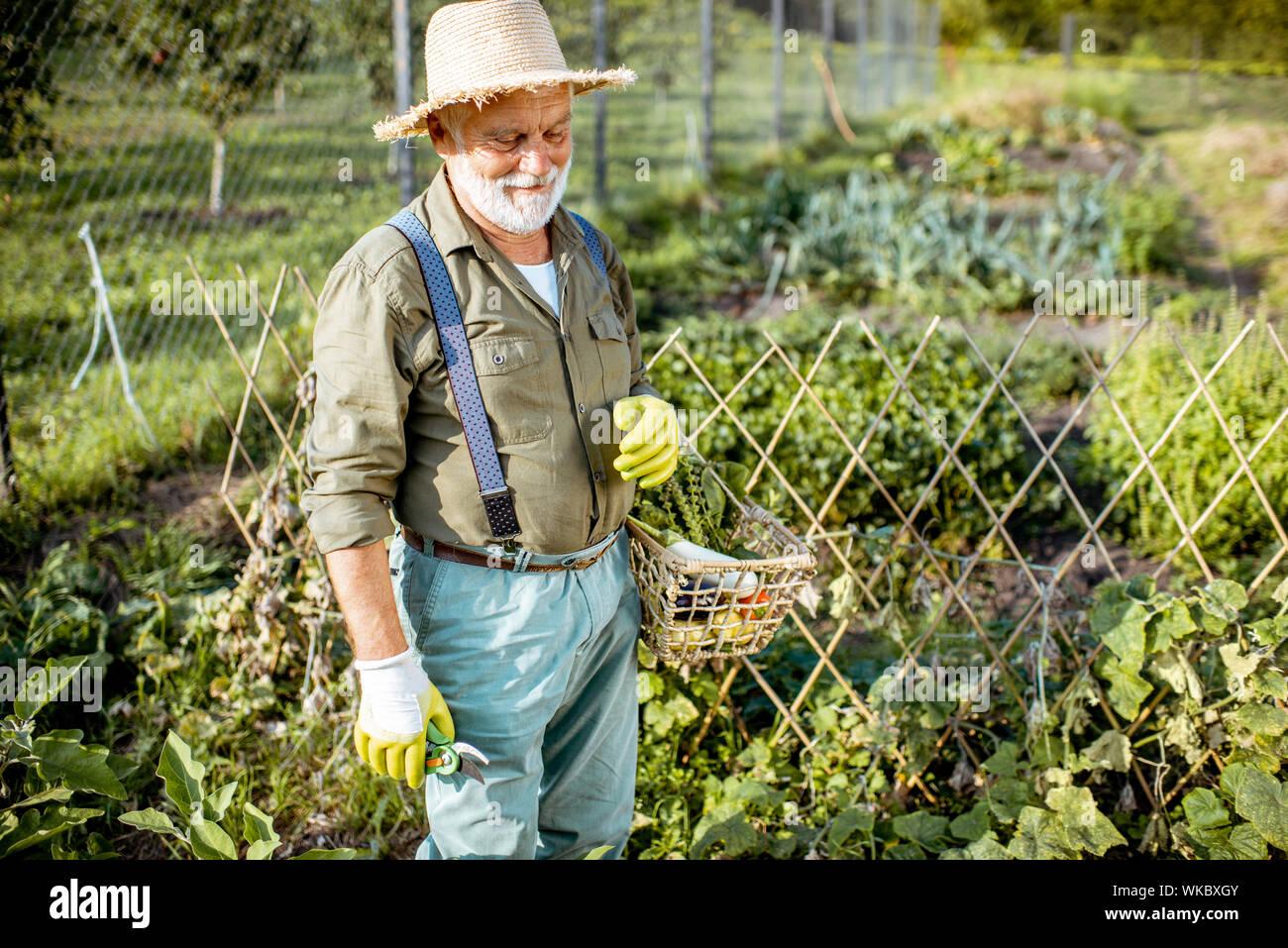 Retrato de un anciano bien vestido agrónomo recién recogido de verduras en el jardín al aire libre. Concepto de creciente de productos orgánicos y de jubilación activa Foto de stock