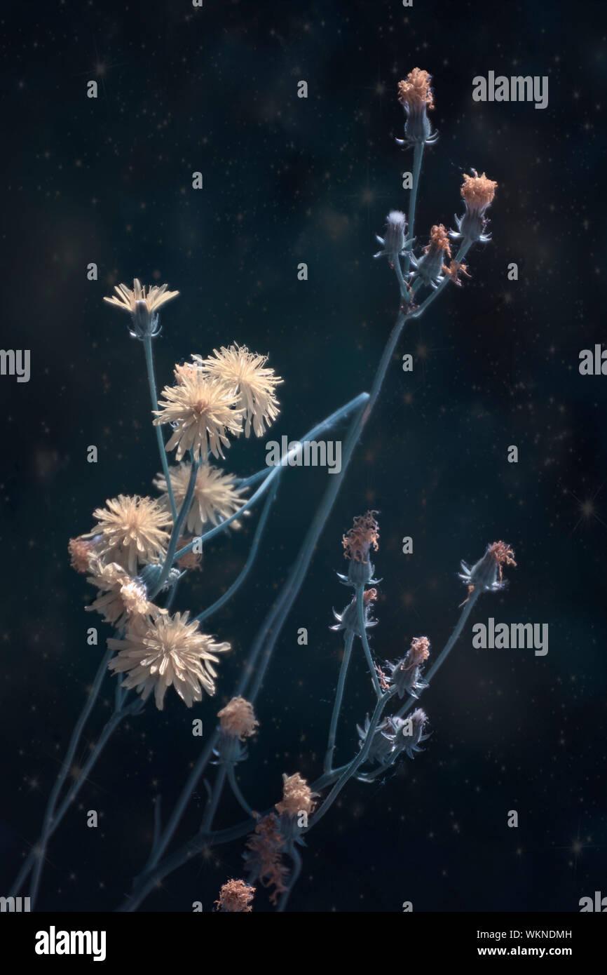 Close-up de flores congeladas Foto de stock
